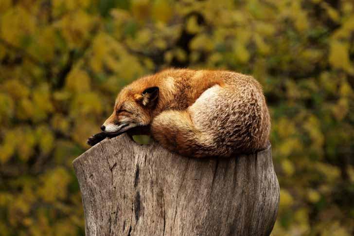 Meerfase slaap bij ploegenwerk
